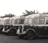 Dodge Kew coaches from 1939