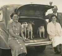Dogs in the car's boot