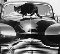 Front of the Phase 1 Vanguard, cat sat on the bonnet